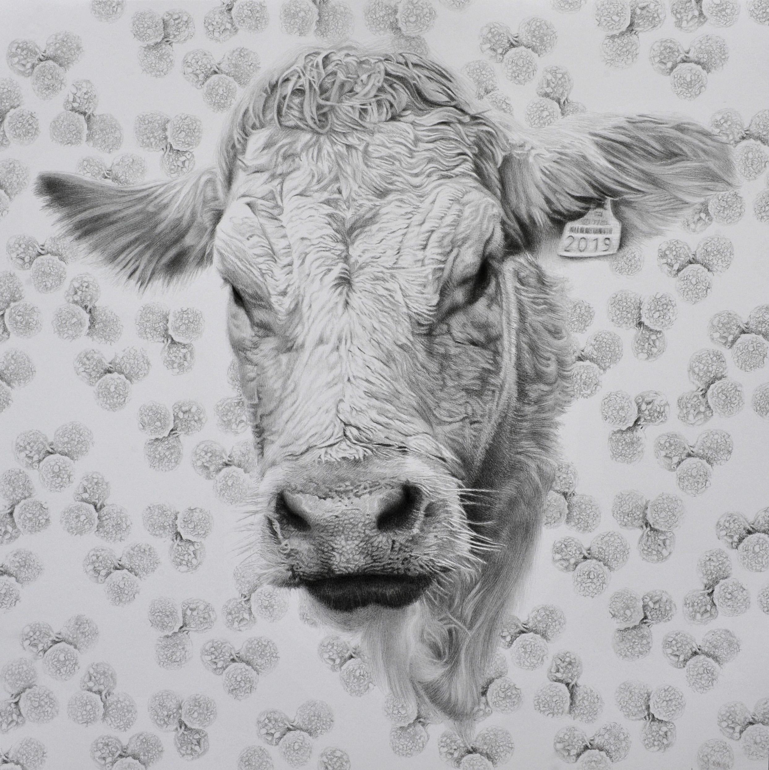 Mycoplasma Mycoides, série Portraits Viraux, crayon graphite sur papier, 50x50cm